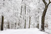 美丽森林雪景
