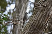 森林中的麻雀