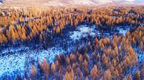 林海雪原松林景观