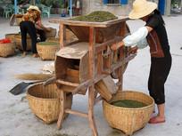 农村女人摇动扬谷机为花椒脱壳