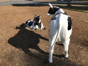 牛和影子雕塑