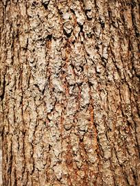 松树树皮纹理