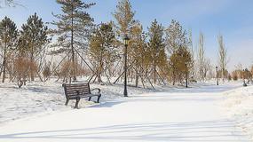 雪后静谧的松林