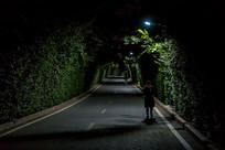 夜间林荫小道
