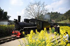 穿行在油菜花中的蒸汽小火车