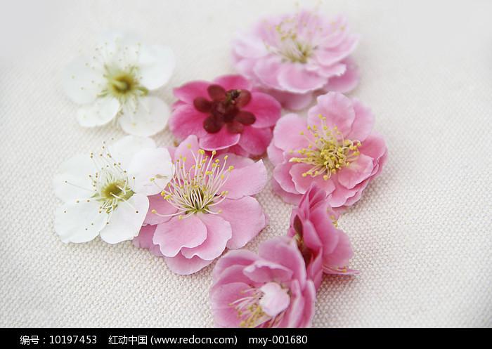 春天梅花图片