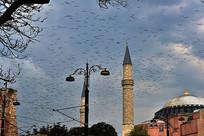 飞鸟和圣索菲亚教堂摄影