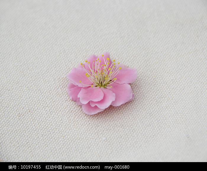 粉色梅图片