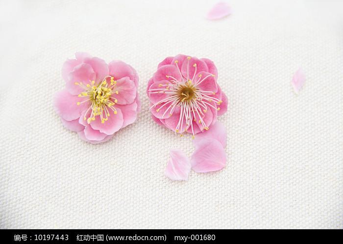 梅花花瓣图片