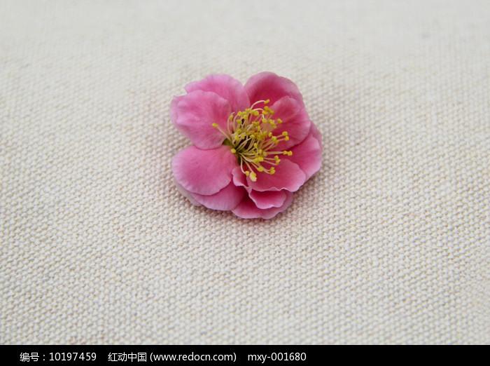 梅花花蕊图片