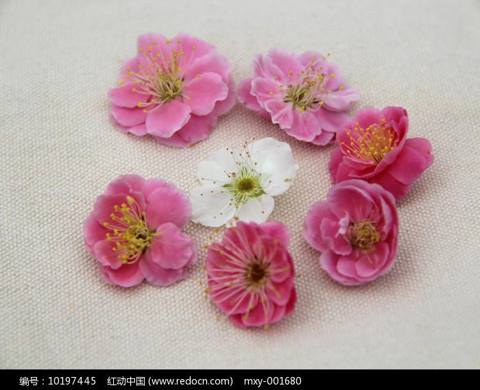 梅花花团图片