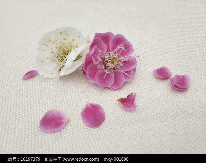 飘落的梅花瓣图片