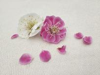 飘落的梅花瓣