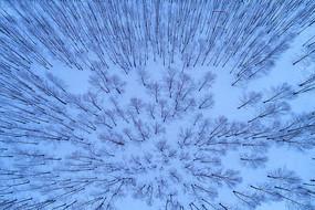 航拍茫茫的雪色树林