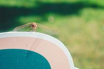 蜻蜓头部特写