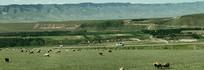 天山下的牧羊场