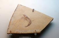 虾化石标本