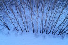 雪原小树林航拍