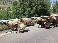 羊群搬新家