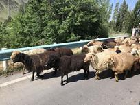 转场的羊群