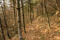 冬日森林暖阳