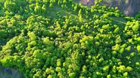 航拍绿色丛林