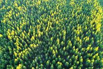 航拍绿色林海