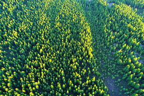 航拍绿色松林