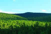 茫茫绿色林海