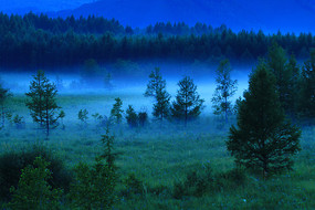 茂密树林夜雾迷漫