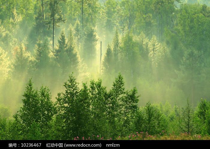 茂密树林雨后雾气阳光图片