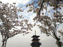 樱花包围的楼宇
