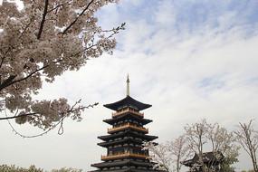 樱花风景图