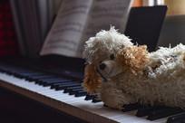 钢琴上的布绒玩具狗