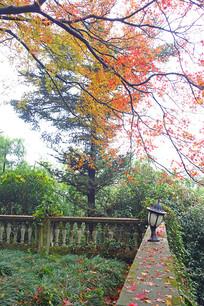 莫干山森林秋色