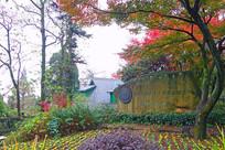 莫干山森林秋色红叶