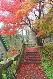 莫干山森林秋色 台阶落叶