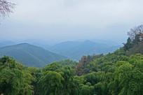 莫干山山林风光