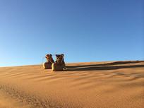 沙漠中夕阳下的鞋子