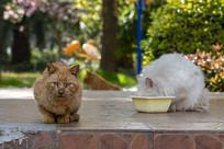 百般无奈的橘猫