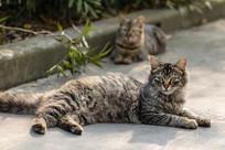 保护小猫的长毛虎斑母猫