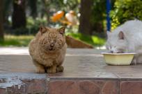 欲哭无泪的橘猫