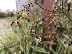 兰花草花朵特写