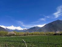 西藏林芝田园风光