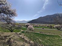 西藏林芝田园风光摄影
