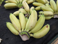新鲜的水果香蕉