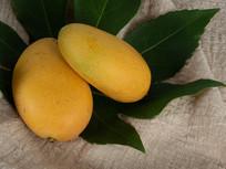 绿叶衬托下新鲜的芒果