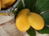 热带水果-芒果