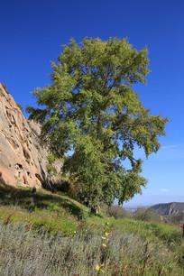 山崖边的绿树