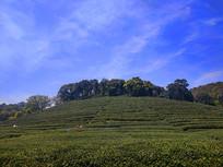 蓝天白云茶园景